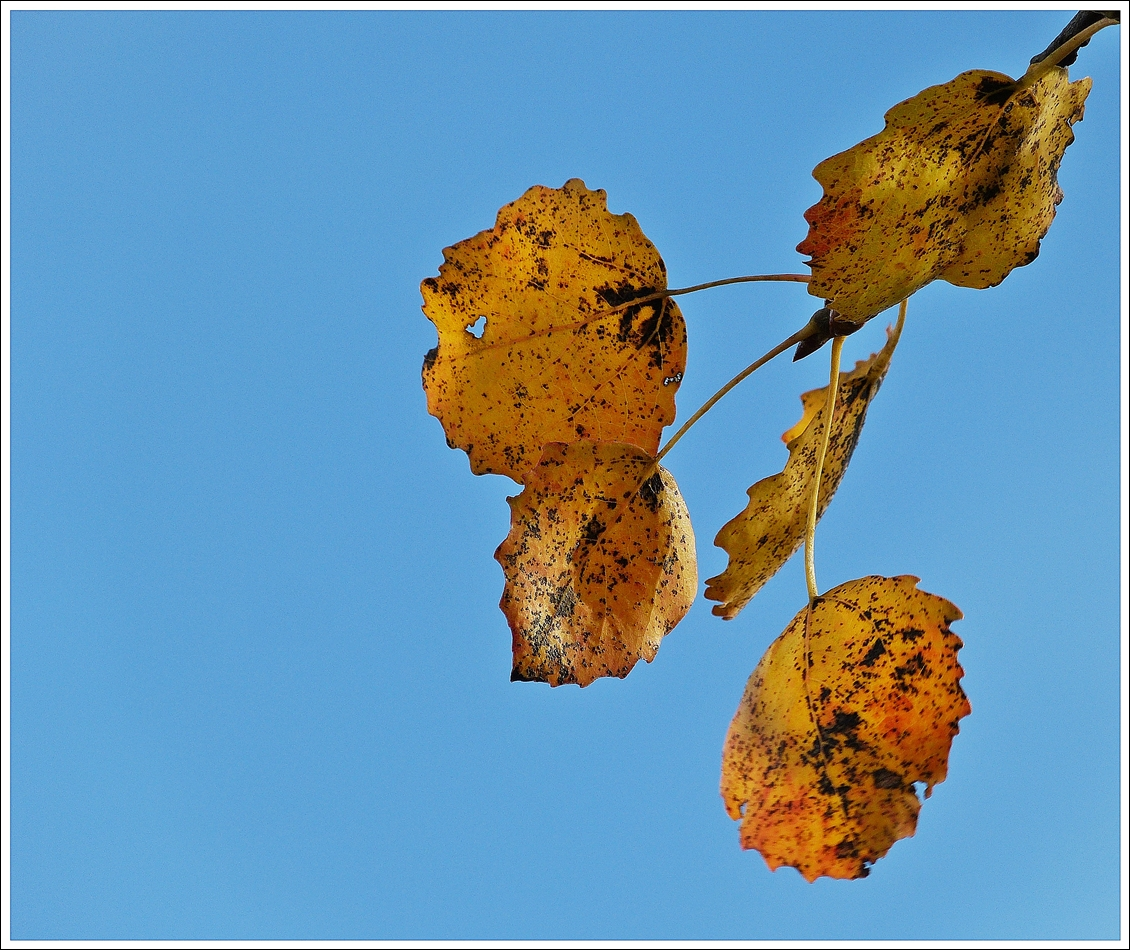 . Herbstimpression. 22.10.2013 (Jeanny)