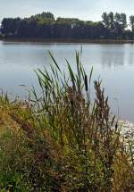 Eine Impression am Elkenrother Weiher (04.09.2013)