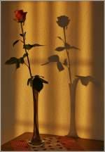 Verschiedenes/162079/aus-eins-mach-zwei-eine-rose Aus eins mach zwei, eine Rose im Abendlicht. (30.09.2011)