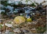 Verschiedenes/178737/das-geheimnis-ist-gelueftet-es-ist Das Geheimnis ist gelüftet. Es ist nicht nur die 'Natur', welche die vielen Vögel in Goebelsmühle anlockt. 03.02.2012 (Jeanny)